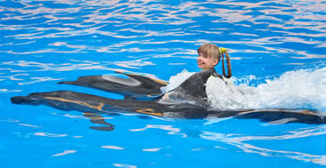 2 day bahamas cruises swim with the dolphins Freeport, Bahamas
