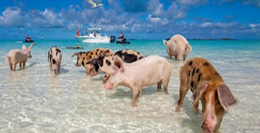 2 day bahamas cruises swim with the pigs Freeport, Bahamas